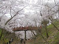 20070421sakura.jpg