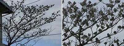 20090202suzume.jpg